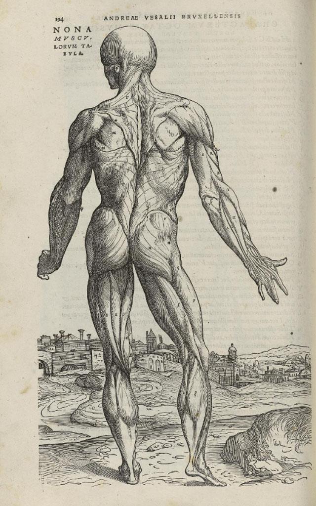 de-humani-corporis-fabrica-page-194