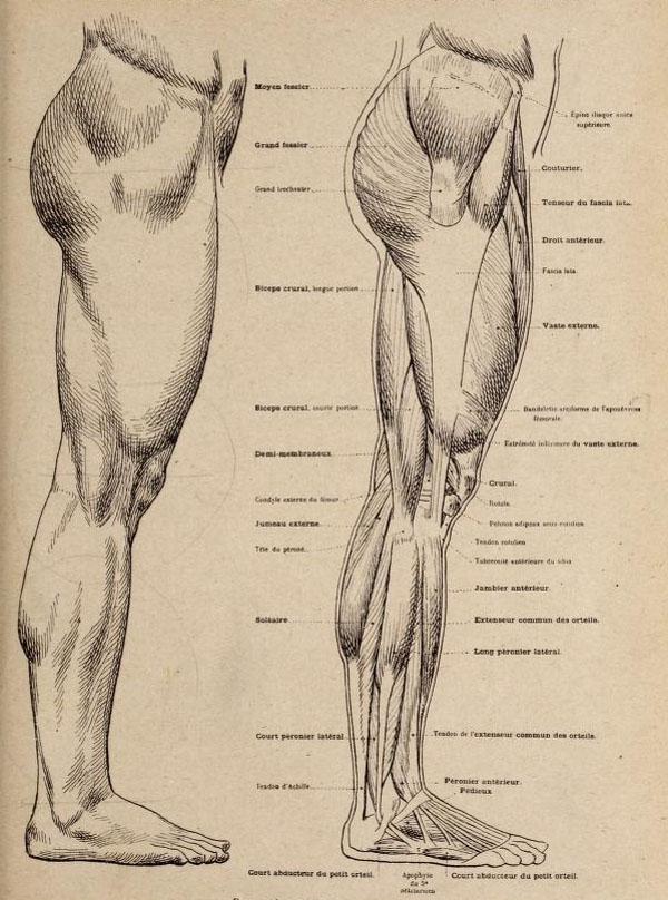 144 - Nueva Anatomía Artística del Hombre de Paul Richer - Gcomics