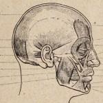 anatomia-artistica-hombre-paul-richer-thumb