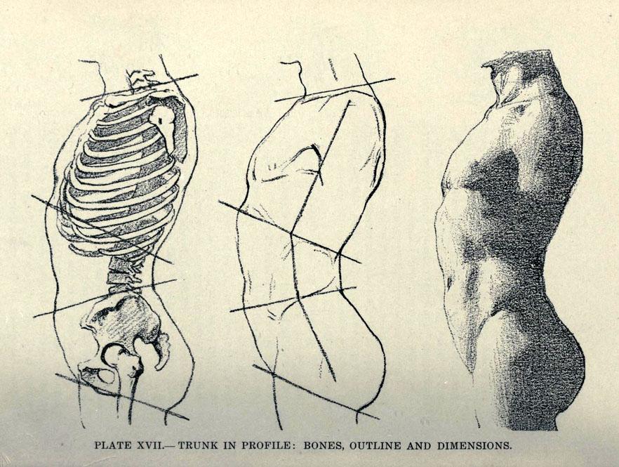 carlo-ruini-anatomia-torso