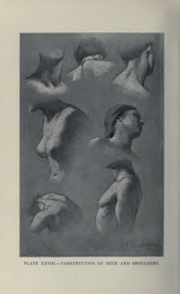 lamina-la-figura-humana-vanderpoel-cuello-y-hombros