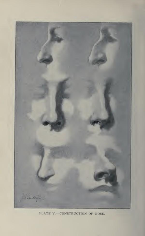 lamina-la-figura-humana-vanderpoel-nariz