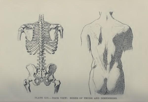 lamina-la-figura-humana-vanderpoel-torso-espalda