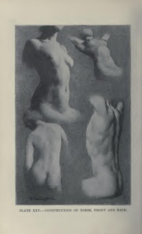 lamina-la-figura-humana-vanderpoel-torso
