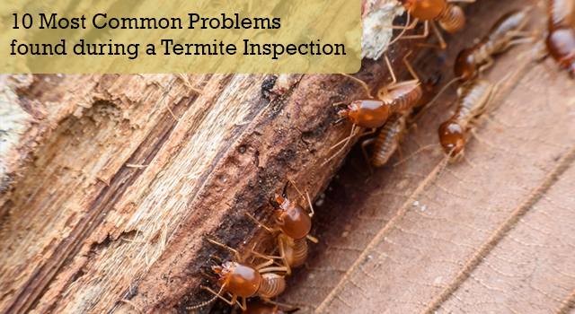 10 Most Common Problems found during a Termite Inspection