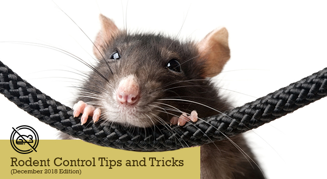 Rodent Control Tips and Tricks
