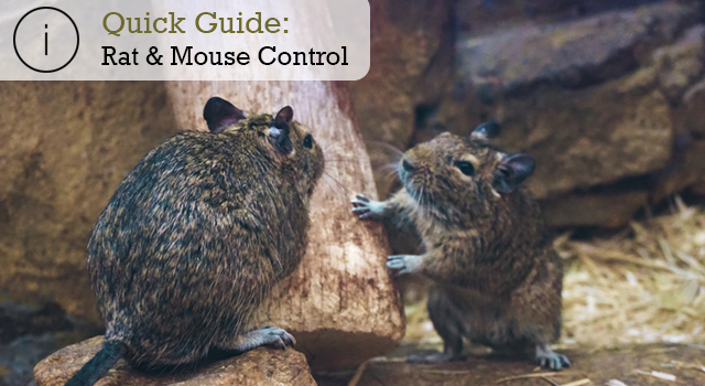 Quick Guide: Rat and Mouse Control