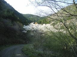 2005_0417_151807AA_s
