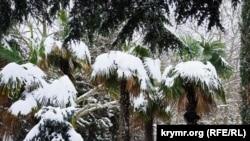 Гаспра, Кореиз и Алупка попали под «снежный удар» – глава Ялты