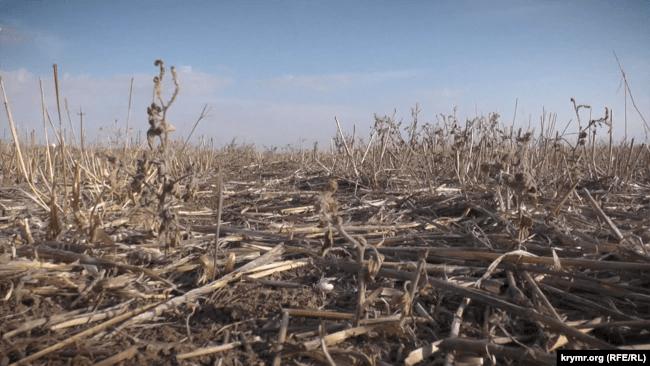 Крим, село Земляничне, сільгосподарське поле, система No-Till