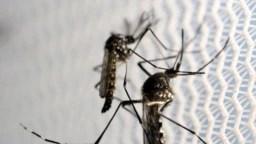Во Македонија се очекува да има повеќе суши како резултат на климатските промени. Од промената на климата ќе има и поместување на живеалиштата, на пример комарците. Експертите велат дека има ризици од зголемено пренесување на вектор преносливи болести, како маларија или денга.