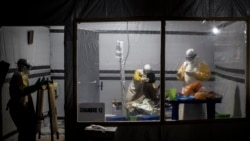 Quiz - Scientists make progress in treating Ebola virus