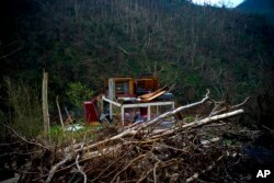 FILE - The foundation of a house stands amid broken trees in the mountains after Hurricane Maria in Morovis, Puerto Rico, Sept. 30, 2017. Environmental groups and volunteers are gathering native seeds to replant forests across the U.S. territory and grafting broken coral back onto shattered reefs to help repair damage in the largest-ever effort of its kind for Puerto Rico.