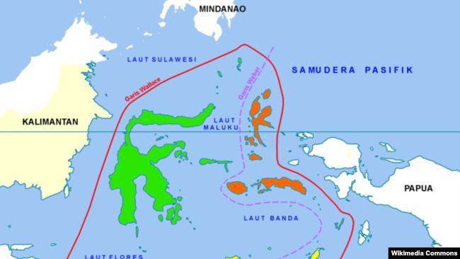 Wallacea adalah kawasan biogeografis yang mencakup sekelompok pulau-pulau dan kepulauan di wilayah Indonesia bagian tengah, terpisah dari paparan benua-benua Asia dan Australia oleh selat-selat yang dalam. (Foto: Wikipedia)