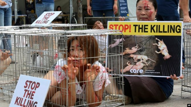 Các nhà hoạt động vì quyền động vật châu Á phản đối việc giết mổ và bán thịt chó.