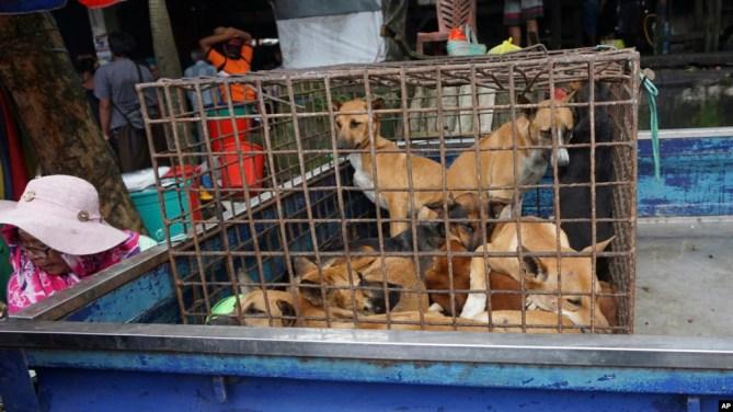 Chó được bày bán làm thịt tại chợ ở Air Madidi, North Sulawesi, Indonesia.