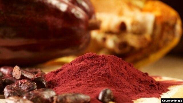 ສານ Flavanol, ຕາມທຳມະຊາດແລ້ວ ມີສານທີ່ຕ້ານອະນຸມູນອິດສະຫຼະ ຫຼື antioxidants ທີ່ພົບເຫັນໃນໝາກໂຄກາ ຊຶ່ງມັນສາມາດຕ່າວປີ້ນ ຄວາມຊົງຈຳທີ່ລົດນ້ອຍຖອຍລົງ ທີ່ກ່ຽວພັນກັບອາຍຸແກ່ຂຶ້ນ ໃນບັນດາຜູ້ເຖົ້າຜູ້ແກ່ນັ້ນ ອິງຕາມການສຶກສາ ເມື່ອບໍ່ນານມານີ້. (ຮູບພາບ ຂອງ ບໍລິສັດ Mars, Inc., ເປັນບໍລິສັດຜະລິດໂຊໂກແລັດ ຜູ້ທີ່ໃຫ້ທຶນການສຶກສາ.)