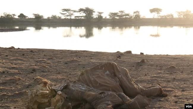 Drought, Political Maneuvering Blamed for Central Kenya's Unrest