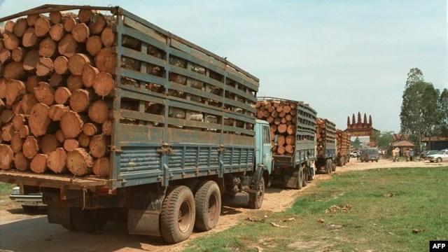 Ông Taing Sok Ngy bị cáo buộc làm giấy tờ giả cho phép xuất khẩu hơn 100 tấn gỗ quý bất hợp pháp vào Việt Nam từ năm 2012 đến 2014, và nhận hối lộ từ các công ty Việt Nam.