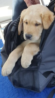 Baby Durango in a backpack