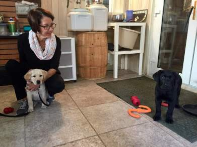 Dekalb and DeLancey puppy meeting for babies!