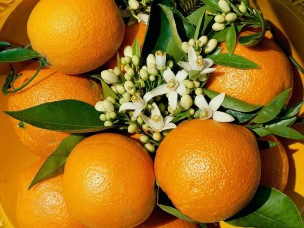 Скачать обои Апельсин, цветы, фрукт на рабочий стол ...