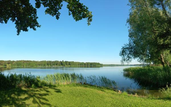 Скачать обои Лето, река, природа, деревья, трава, камыши ...