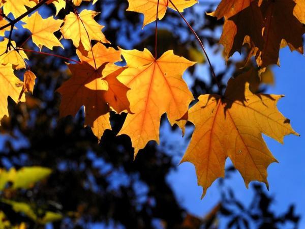 Скачать обои Листья, ветки, деревья, осень на рабочий стол ...