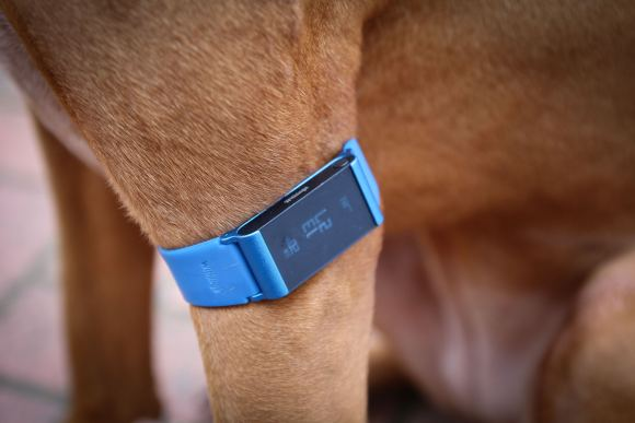 withings_pulse_Ox-2