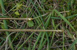 divine_l_rods_gold_water_dowsing