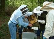 Photo apiculture