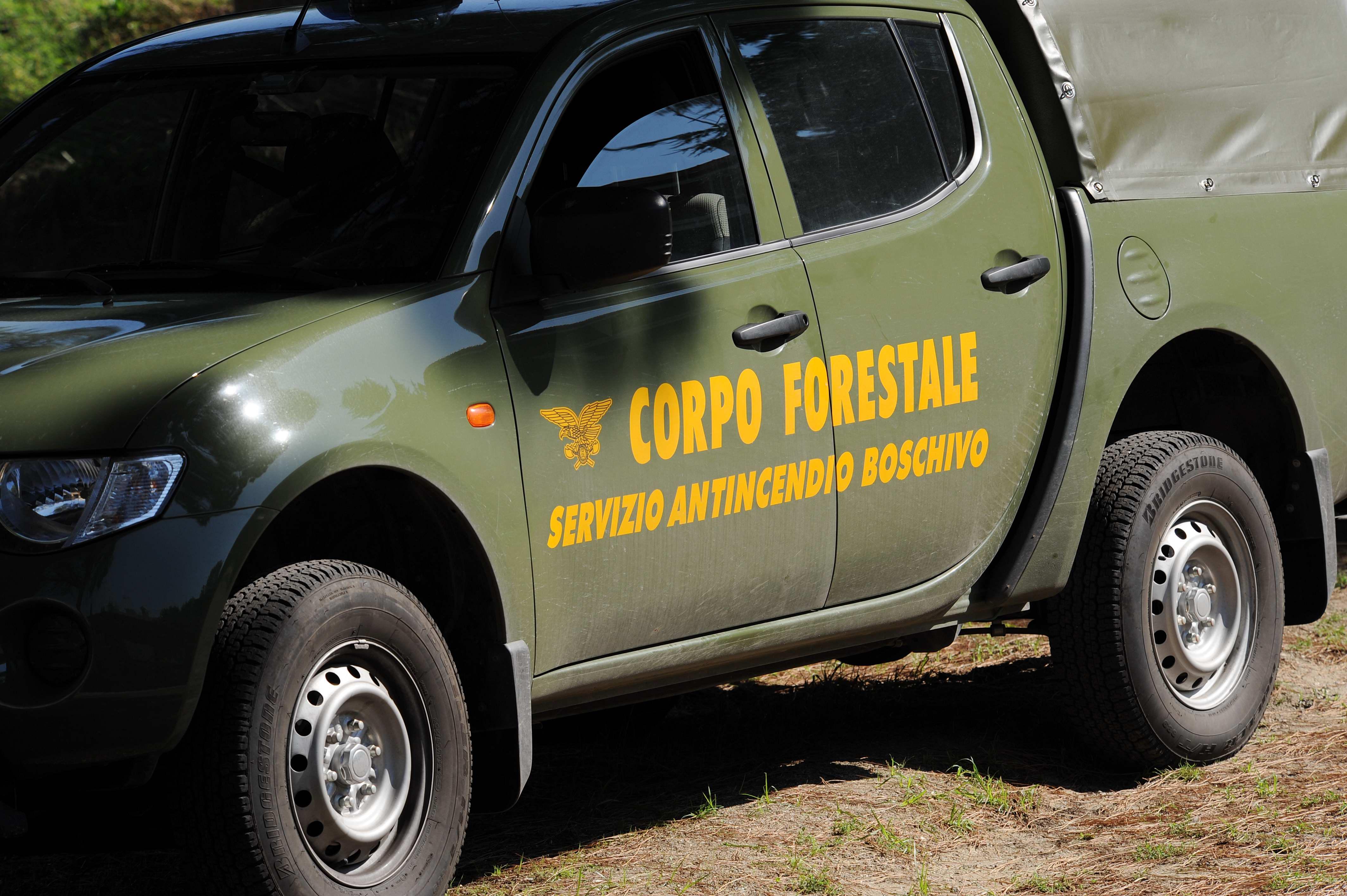 Forestali assorbiti nei carabinieri, ma non in Sicilia: competenze  duplicate - Giornale di Sicilia