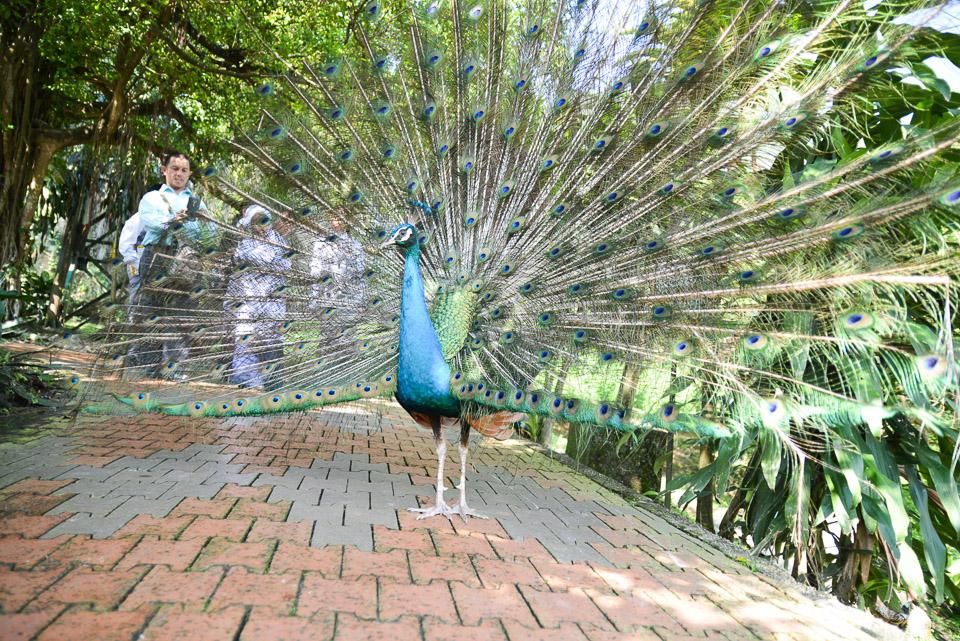 KL Bird Park-8