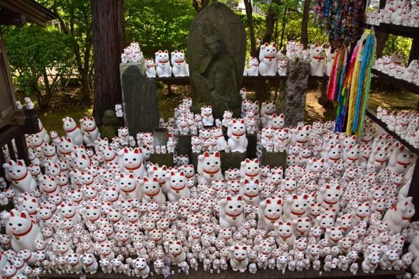 Maneki Neko Tempio Gotoku