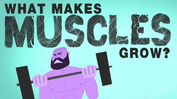 What makes muscles grow? 21