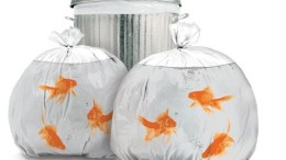 Goldfish trash bags pretty up the neighborhood and drive cats nuts