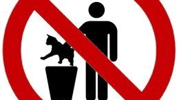 Random News: Woman Who Put Cat in Trash Pleads Guilty to Animal Cruelty
