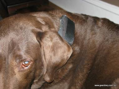Spotlite 2.0 GPS Pet Tracker Review  Spotlite 2.0 GPS Pet Tracker Review  Spotlite 2.0 GPS Pet Tracker Review  Spotlite 2.0 GPS Pet Tracker Review  Spotlite 2.0 GPS Pet Tracker Review  Spotlite 2.0 GPS Pet Tracker Review  Spotlite 2.0 GPS Pet Tracker Review  Spotlite 2.0 GPS Pet Tracker Review  Spotlite 2.0 GPS Pet Tracker Review  Spotlite 2.0 GPS Pet Tracker Review  Spotlite 2.0 GPS Pet Tracker Review  Spotlite 2.0 GPS Pet Tracker Review