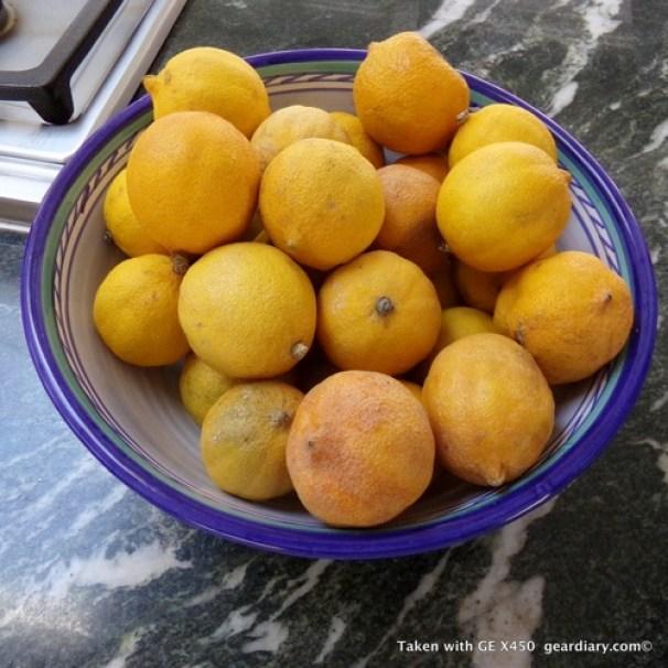 GE-X450-Fruit.jpg