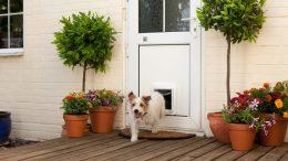 GearDiary SureFlap's Microchip Pet Door Keeps Fido Safe