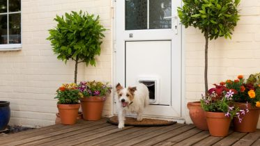 GearDiary SureFlap's Microchip Pet Door Keeps Fido Safe