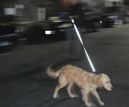 WaterField Wag Dog Leash