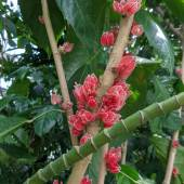 Red flowers on a woody stalk.