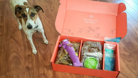 BarkChef Subscription Dog Food Review