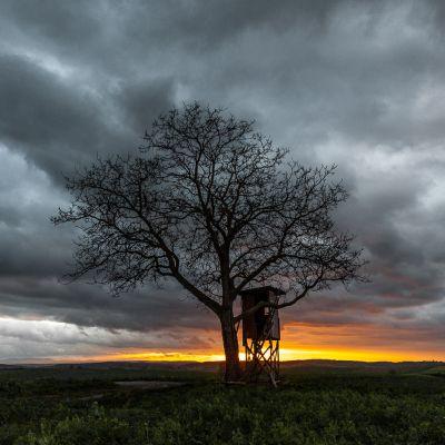 Baum in Abendstimmung