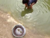 Goldwäsche im Teich