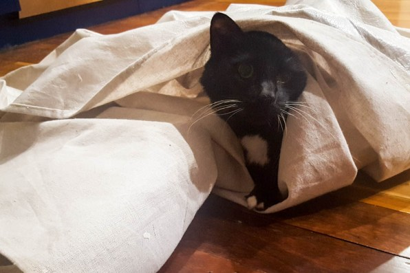 Cookie enjoys a dropcloth
