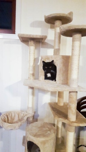 Cookie in one of the cat trees