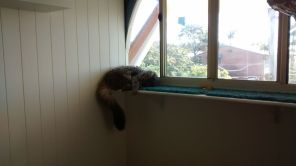 Taala takes a nap on the arch window catsill