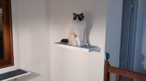 Elska on the floating shelf above the stairs